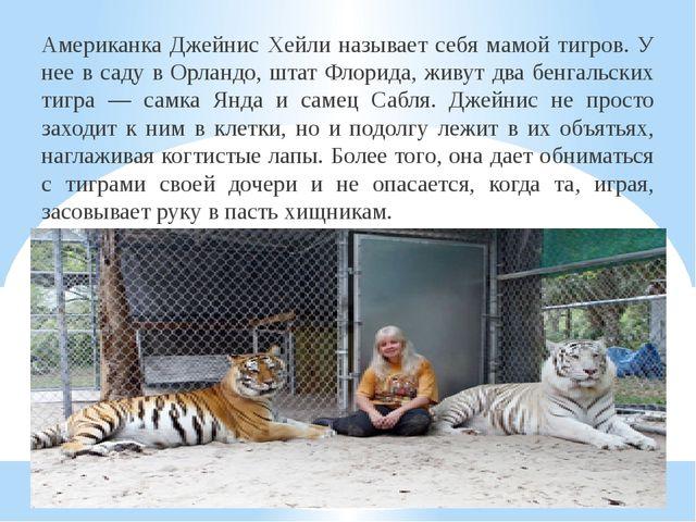 Американка Джейнис Хейли называет себя мамой тигров. У нее в саду в Орландо,...