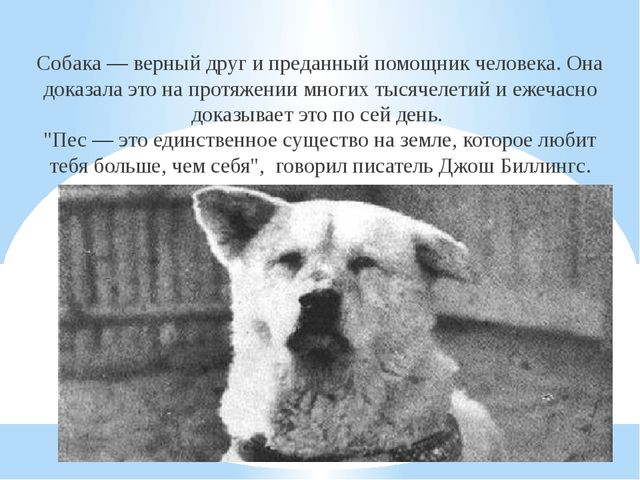 Собака— верный друг ипреданный помощник человека. Она доказала это напротя...