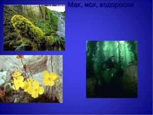 Мак, мох, водоросли