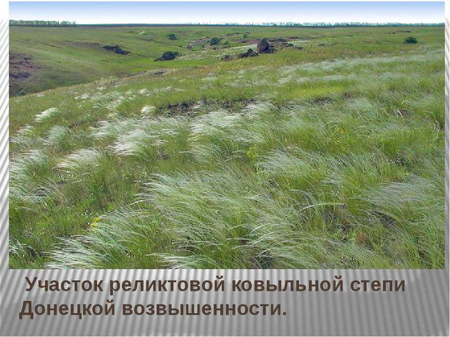 Участок реликтовой ковыльной степи Донецкой возвышенности.