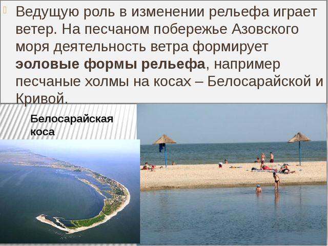 Ведущую роль в изменении рельефа играет ветер. На песчаном побережье Азовског...