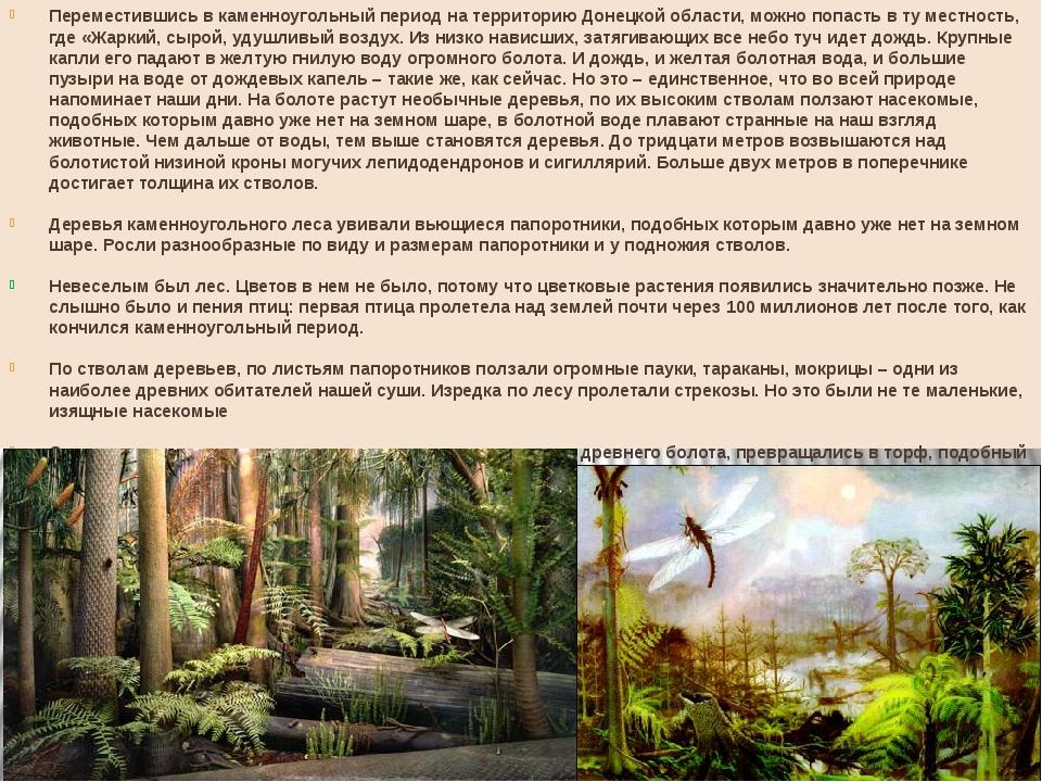 Переместившись в каменноугольный период на территорию Донецкой области, можно...
