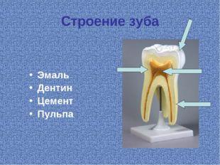 Строение зуба Эмаль Дентин Цемент Пульпа