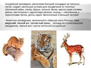 Уссурийский заповедник, располагая большой площадью не тронутых лесов, создае