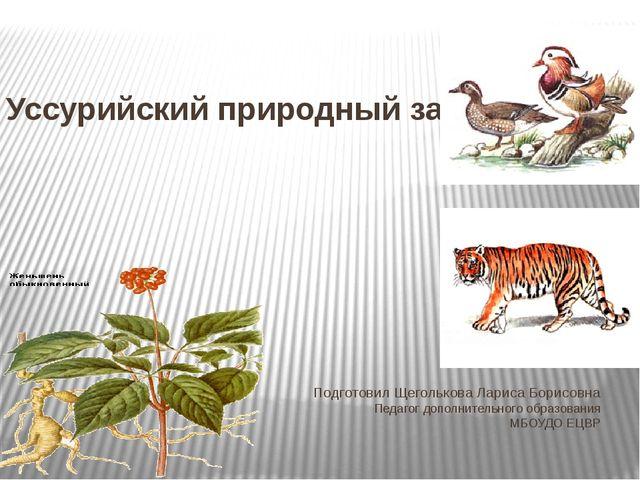 Уссурийский природный заповедник Подготовил Щеголькова Лариса Борисовна Педаг...