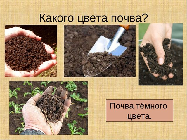 Какого цвета почва? Почва тёмного цвета.