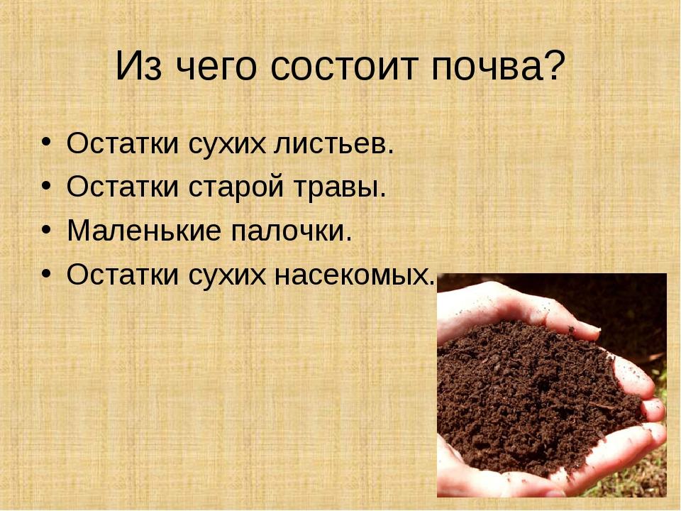 Из чего состоит почва? Остатки сухих листьев. Остатки старой травы. Маленькие...