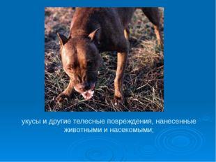 укусы и другие телесные повреждения, нанесенные животными и насекомыми;