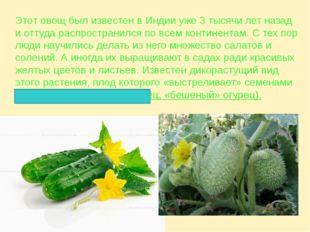 Этот овощ был известен в Индии уже 3 тысячи лет назад и оттуда распространилс