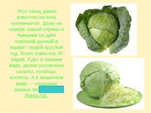 Этот овощ давно известен на всех континентах. Даже на севере нашей страны и А