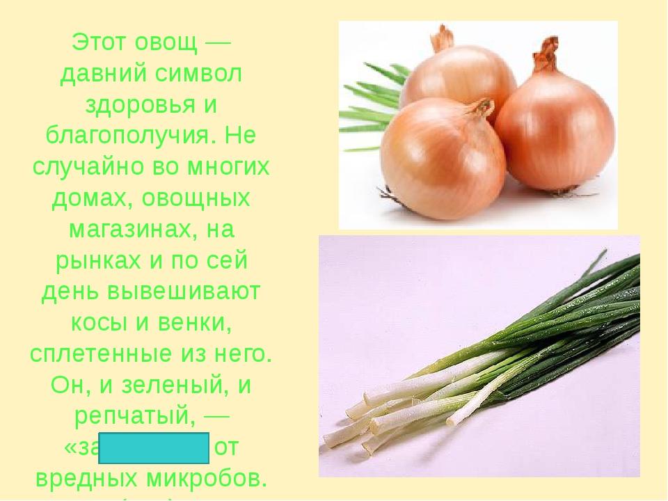 Этот овощ — давний символ здоровья и благополучия. Не случайно во многих дома...