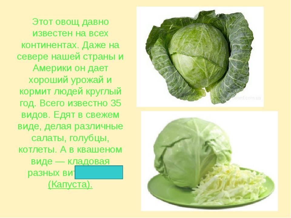 Этот овощ давно известен на всех континентах. Даже на севере нашей страны и А...