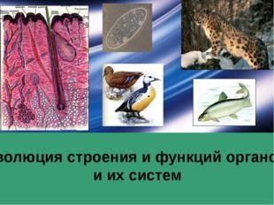 Эволюция строения и функций органов и их систем