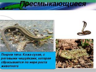 Покров тела: Кожа сухая, с роговыми чешуйками, которая сбрасывается по мере р