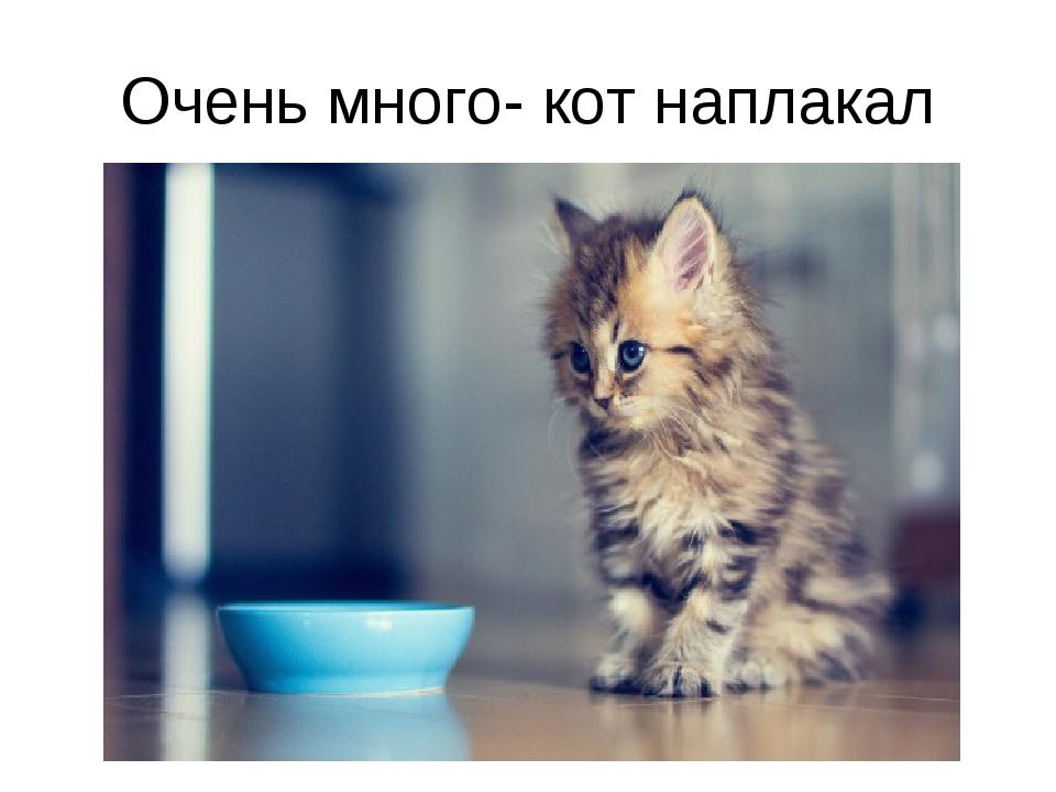 Очень много- кот наплакал