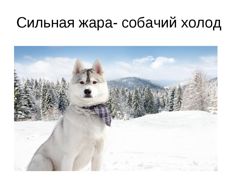 Сильная жара- собачий холод