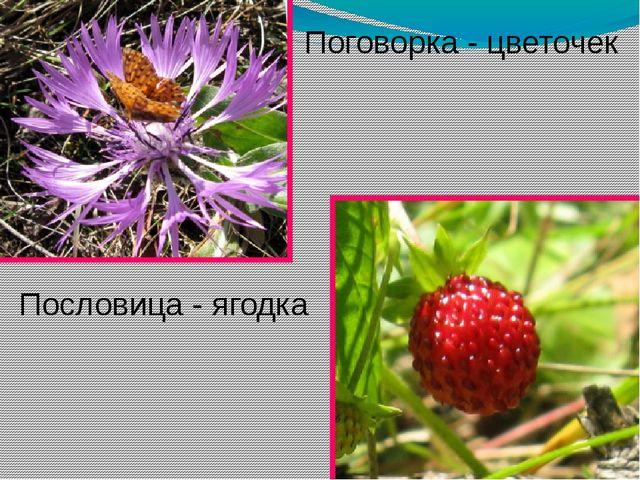 Пословица - ягодка Поговорка - цветочек
