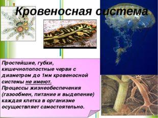 Простейшие, губки, кишечнополостные черви с диаметром до 1мм кровеносной сист