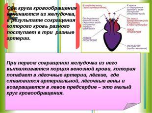 При первом сокращении желудочка из него выталкивается порция венозной крови,