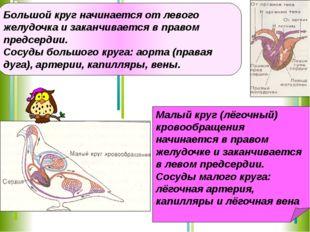 Большой круг начинается от левого желудочка и заканчивается в правом предсерд