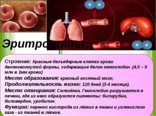 Строение: Красные безъядерные клетки крови двояковогнутой формы, содержащие б