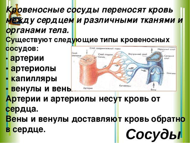 Кровеносные сосуды переносят кровь между сердцем и различными тканями и орган...