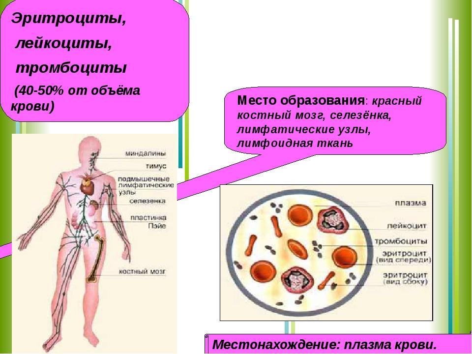 Форменные элементы крови Эритроциты, лейкоциты, тромбоциты (40-50% от объёма...