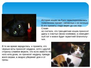 История кошек на Руси характеризовалась появлением примет, связанных с их жи