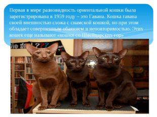 Первая в мире разновидность ориентальной кошки была зарегистрирована в 1959 г