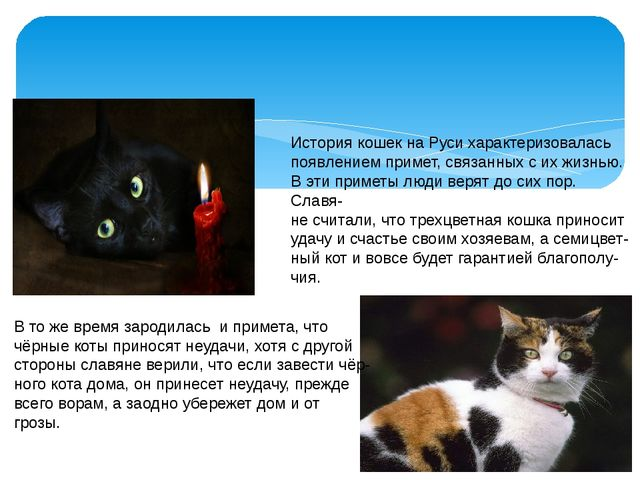 История кошек на Руси характеризовалась появлением примет, связанных с их жи...