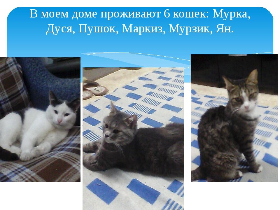 В моем доме проживают 6 кошек: Мурка, Дуся, Пушок, Маркиз, Мурзик, Ян.