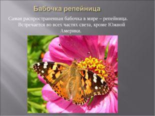Самая распространенная бабочка в мире – репейница. Встречается во всех частях