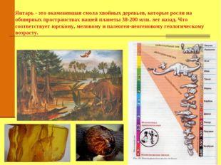 Янтарь - это окаменевшая смола хвойных деревьев, которые росли на обширных п
