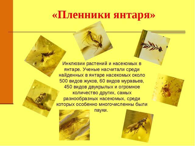 «Пленники янтаря» Инклюзии растений и насекомых в янтаре. Ученые насчитали ср...