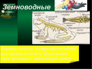 Нервная система- контролирует работу всех органов и систем, обеспечивает связ