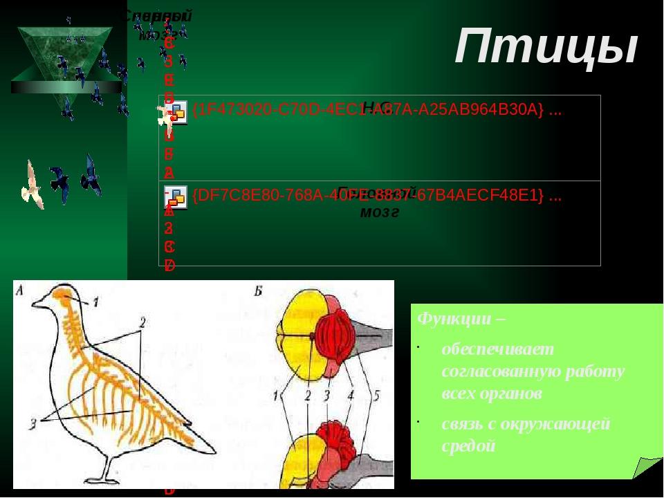Функции – обеспечивает согласованную работу всех органов связь с окружающей с...