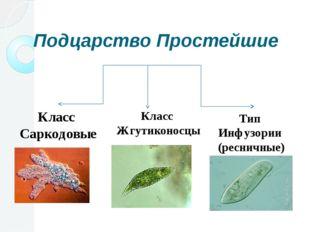 Подцарство Простейшие Класс Саркодовые Класс Жгутиконосцы Тип Инфузории (ресн