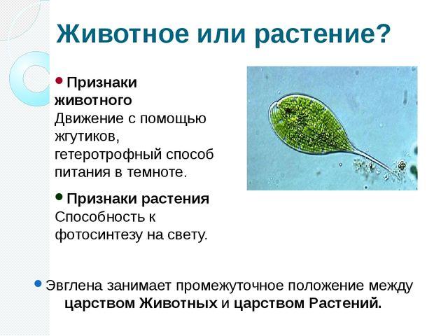 Животное или растение? Признаки животного Движение с помощью жгутиков, гетеро...