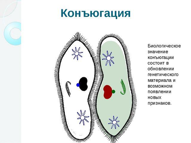 Конъюгация Биологическое значение конъюгации состоит в обновлении генетическо...