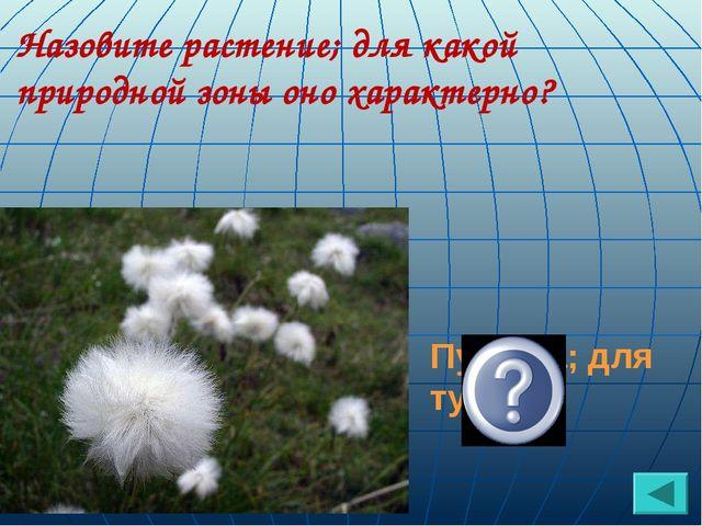 Назовите растение; для какой природной зоны оно характерно? Пушица; для тундры