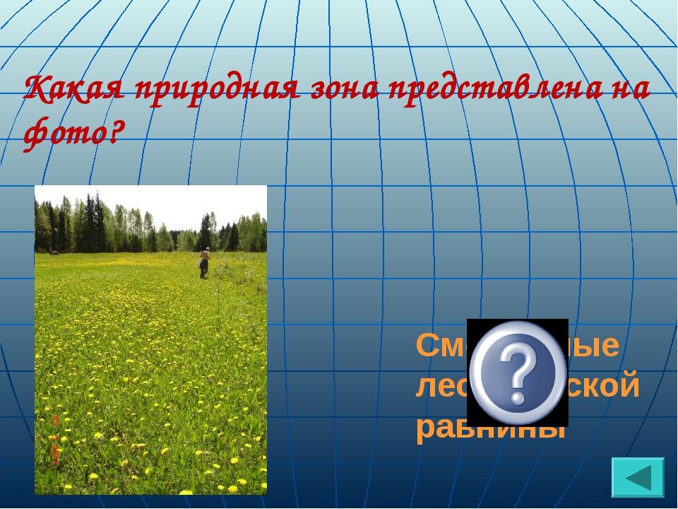 Какая природная зона представлена на фото? Смешанные леса Русской равнины