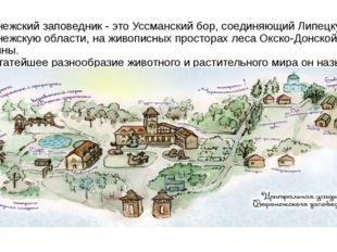 Воронежский заповедник - это Уссманский бор, соединяющий Липецкую и Воронежск