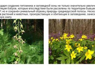 Благодаря созданию питомника и заповедной зоны не только значительно увеличен