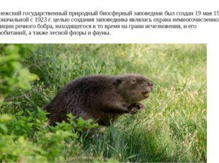 Воронежский государственный природный биосферный заповедник был создан 19 мая
