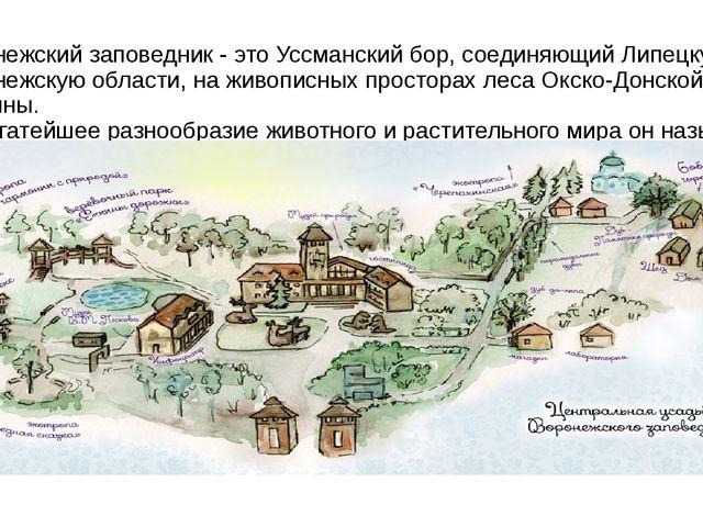Воронежский заповедник - это Уссманский бор, соединяющий Липецкую и Воронежск...