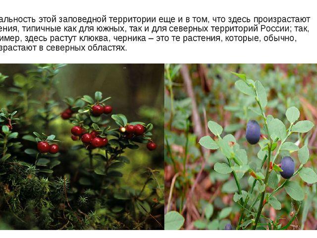 Уникальность этой заповедной территории еще и в том, что здесь произрастают р...