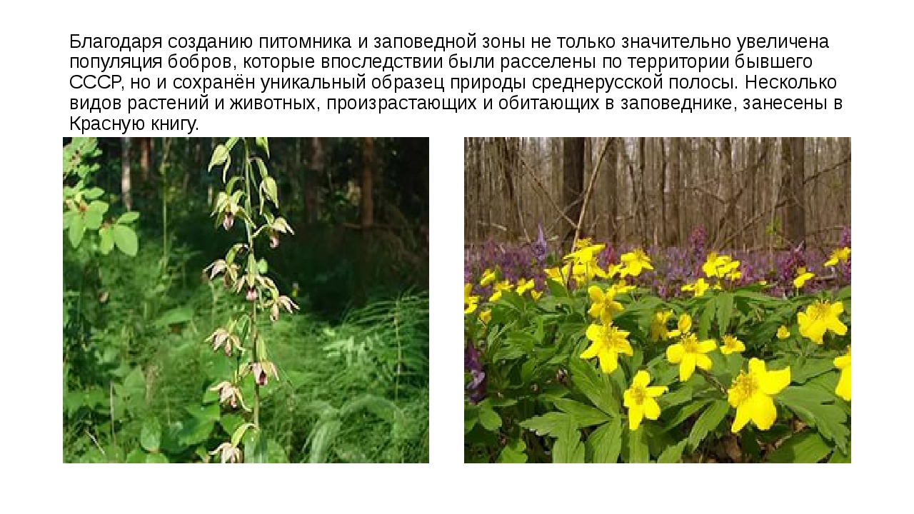 Благодаря созданию питомника и заповедной зоны не только значительно увеличен...