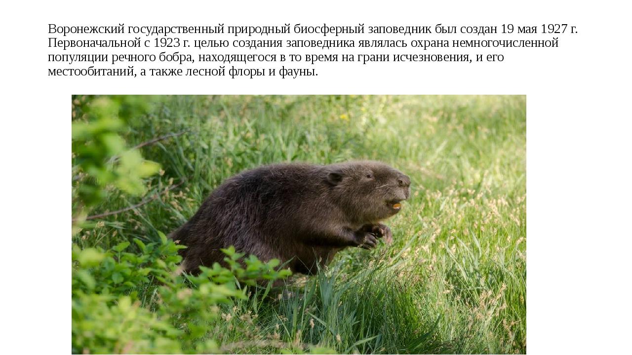 Воронежский государственный природный биосферный заповедник был создан 19 мая...