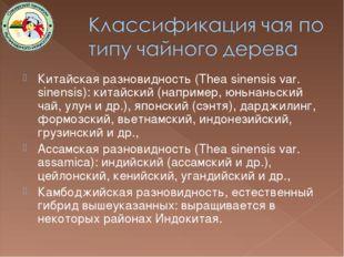Китайская разновидность (Thea sinensis var. sinensis): китайский (например, ю