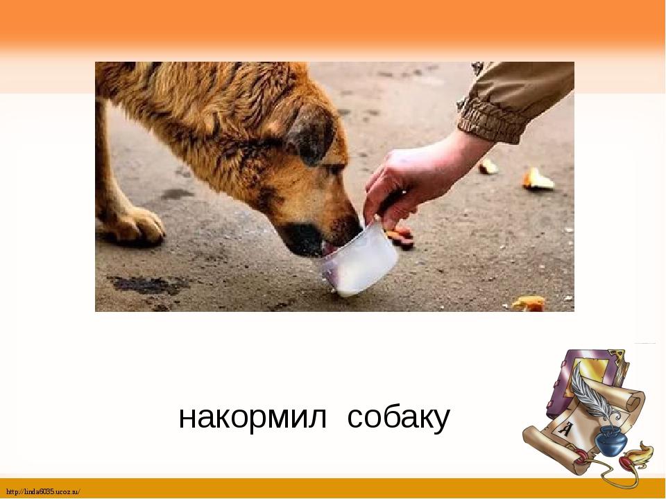 накормил собаку http://linda6035.ucoz.ru/